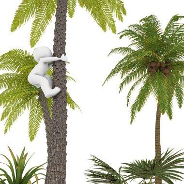 The Palm Island