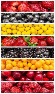 Exotic Summer Fruits