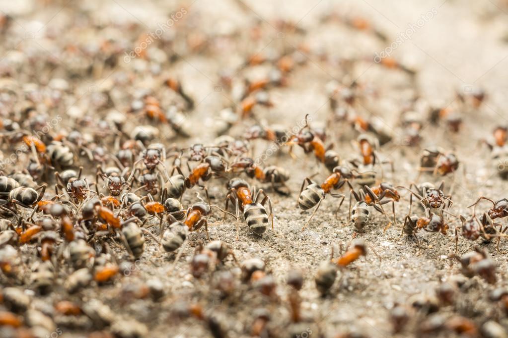 Ants Colony