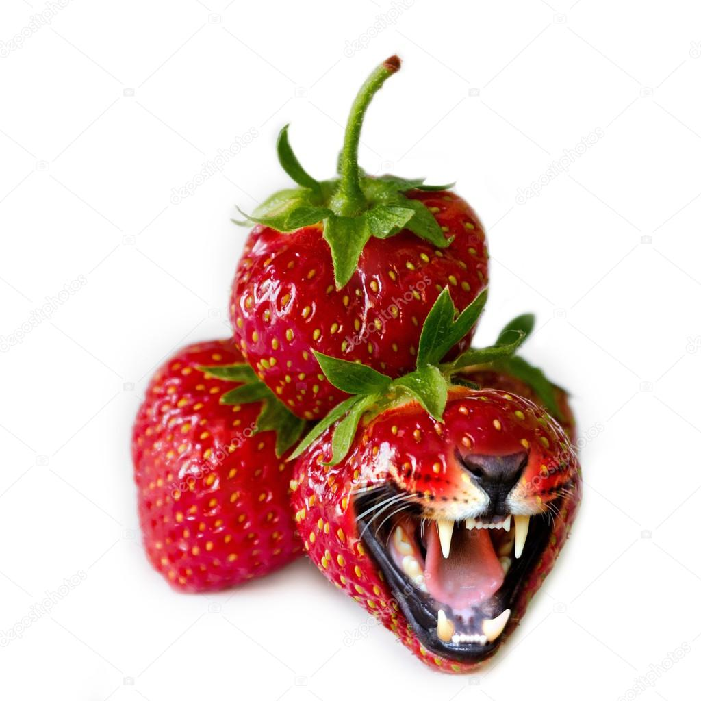 Red strawberries, one of which is the tiger's mouth, on the white background