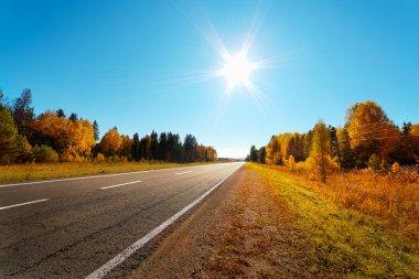 Road in autumn
