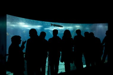People in silhouette standing in the lisbon aquarium.
