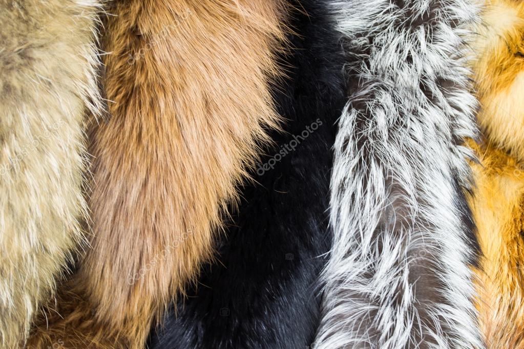 Diversi tipi di tessuto di pelliccia materiale di sfondo - Diversi tipi di figa ...