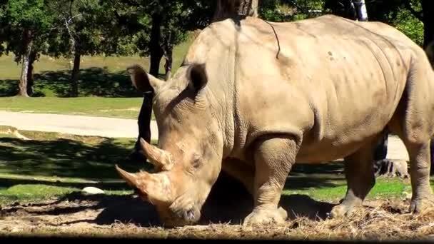 Rhino karcolás ellen egy fa