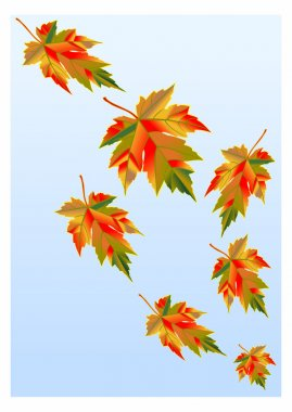 Maple leaves gone with wind