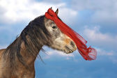 Photo Horse with a red scarf