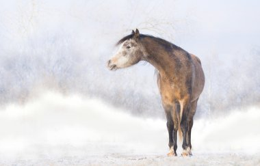 Horse on the background of a snowy landscape