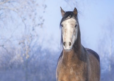 Brown horse on the background of a snowy landscape