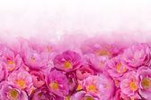 Fotografia sfondo di rose rosa
