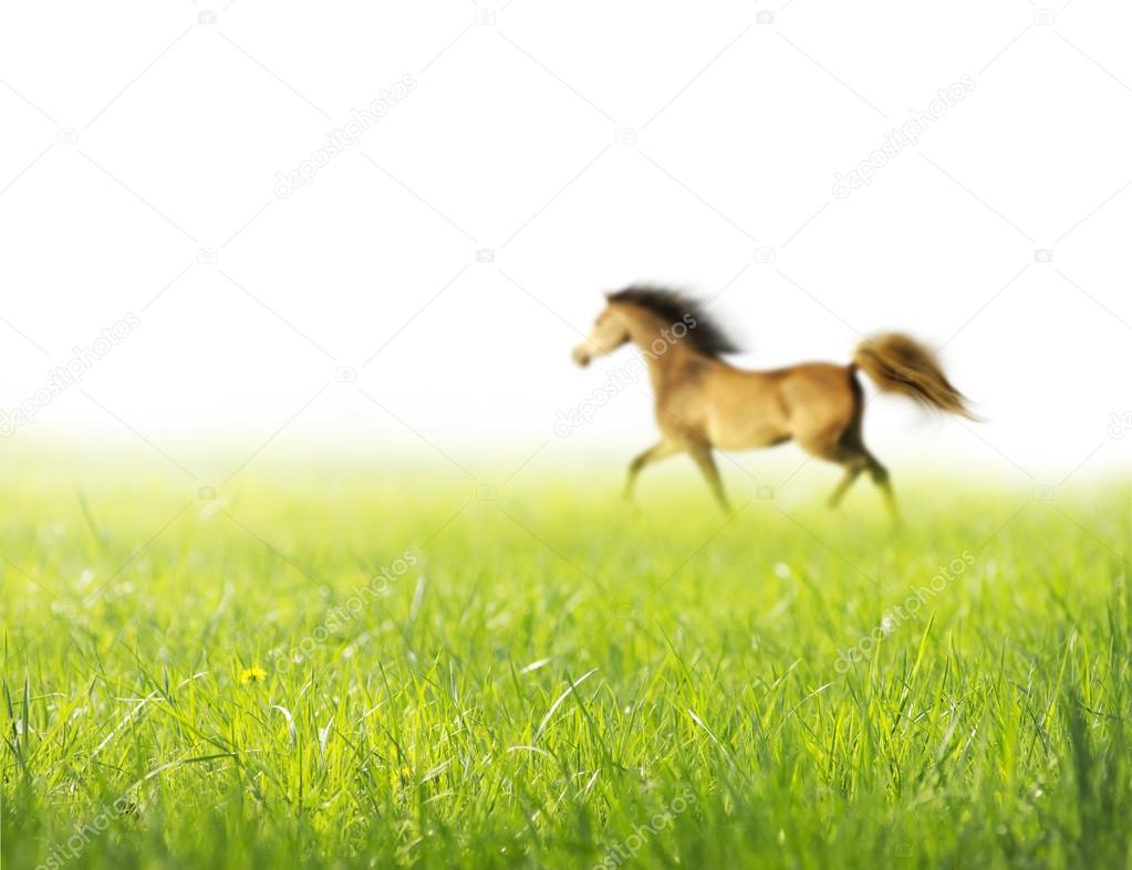Spring horse grass white background