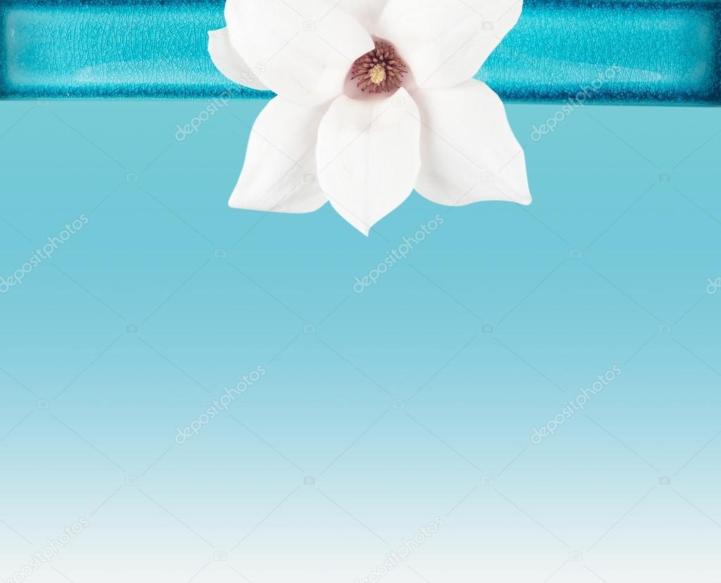 White  Magnolia flower in Blue Bowl
