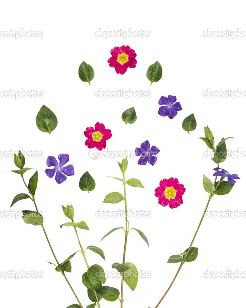 Green shoots, leaves, purple and pink flowers, isolated