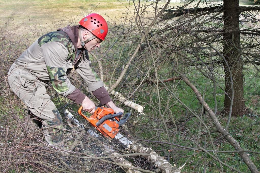 A lumberjack working with a chainsaw, (Betula)