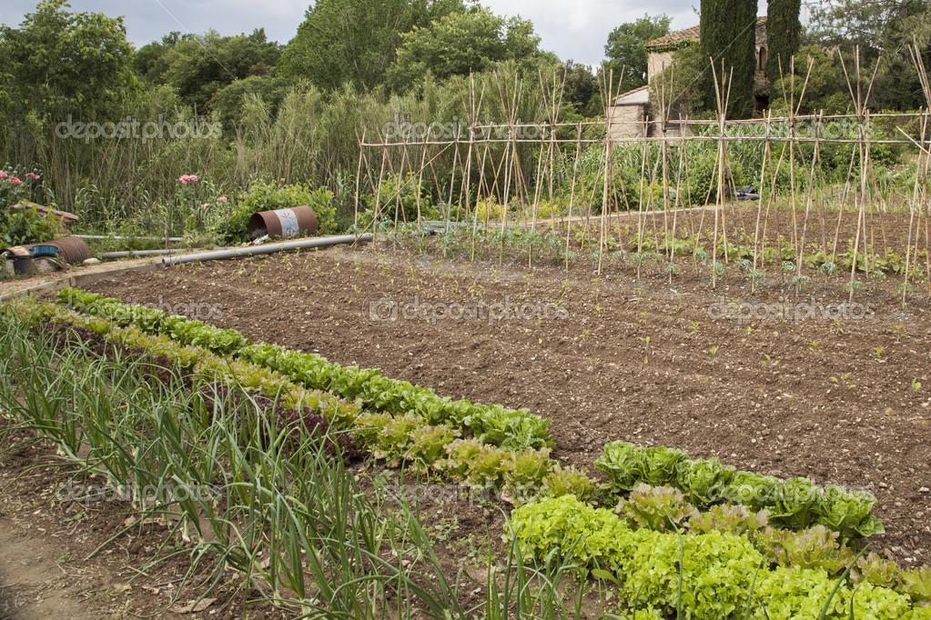 Latest biologische groenten tuin u stockfoto with groenten for Groenten tuin