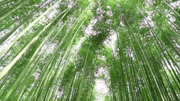 bambusový háj
