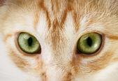 Fotografie kočičí oči
