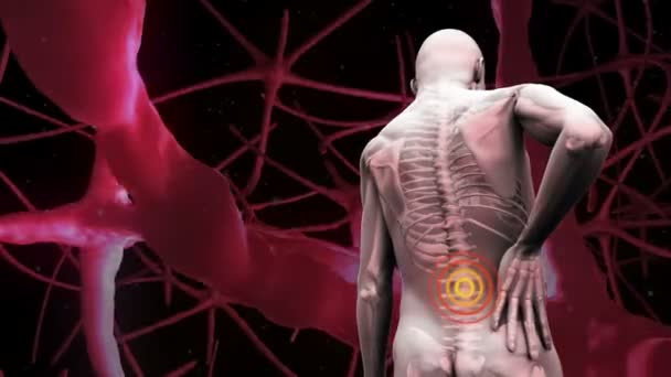 Back Pain Stock Videos Royalty Free Back Pain Footages Depositphotos