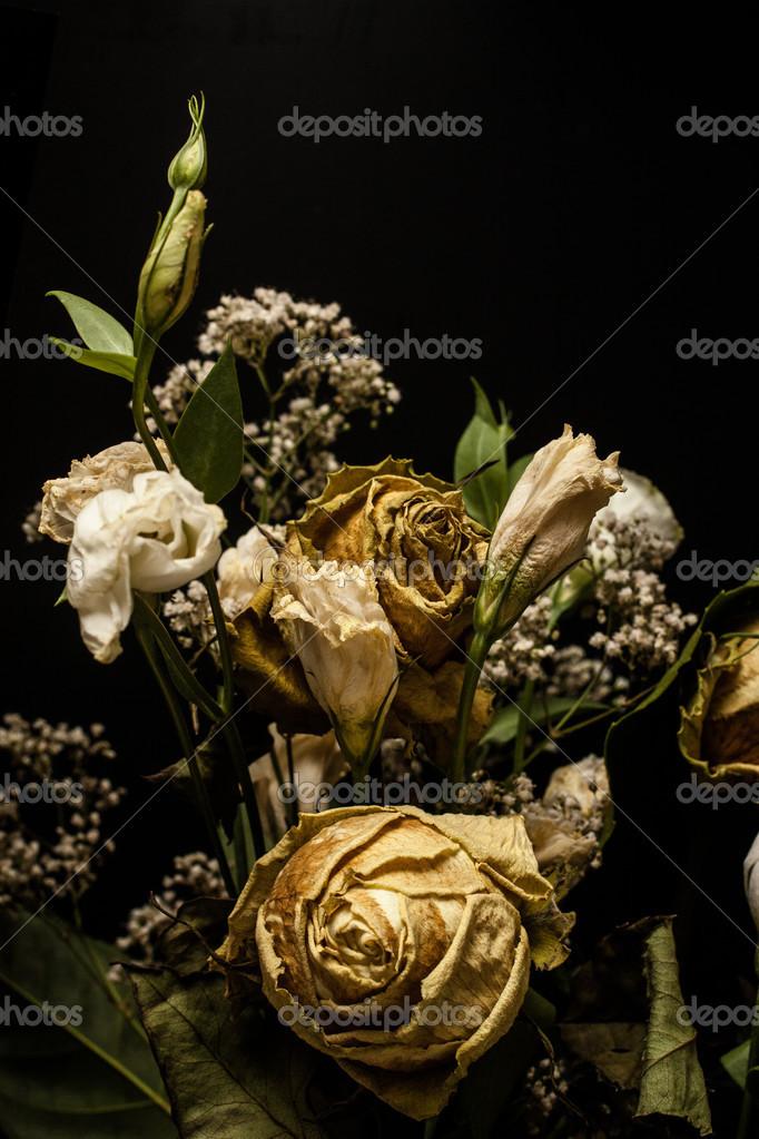 Dead Flowers On A Black Background Photo By Bapawka