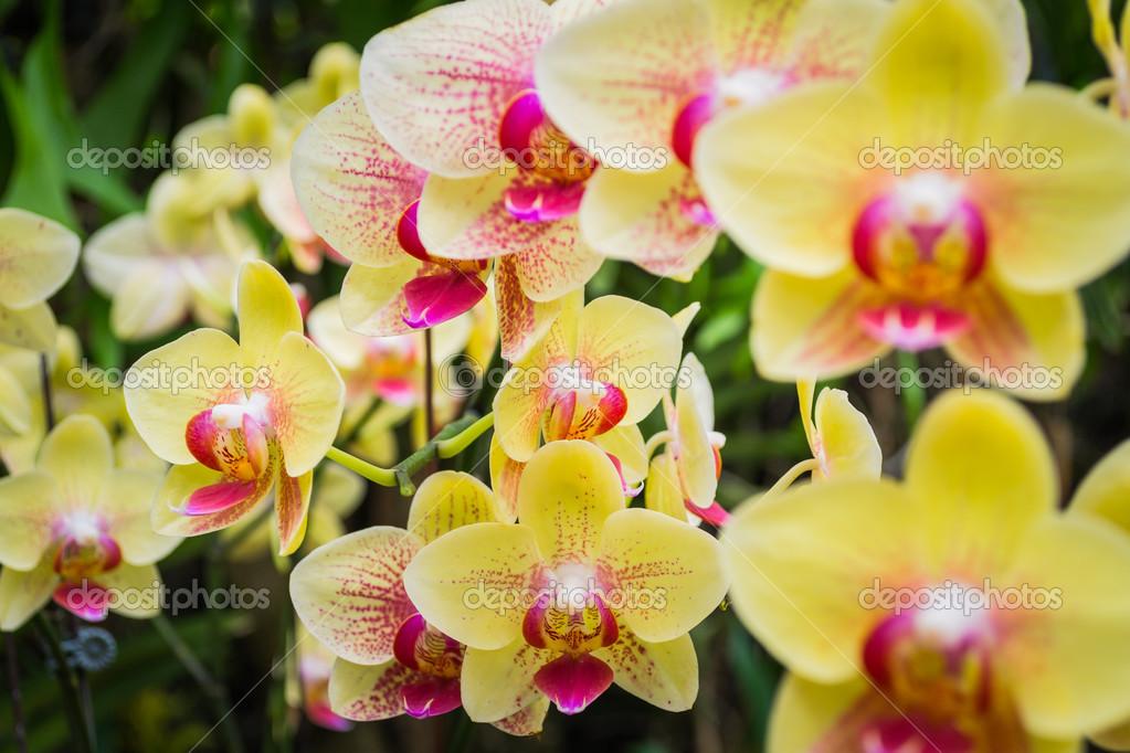 Фото красивых орхидей