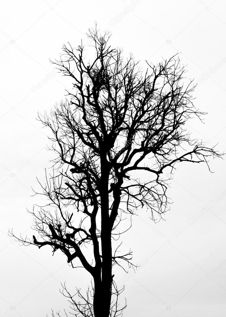 eine Baum-Silhouette auf weiß — Stockfoto © surasaki #31588873