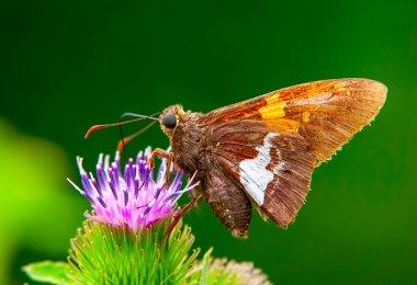 A macro shot of butterfly feeding on a flower
