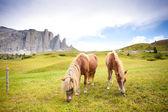 Two horses grazing