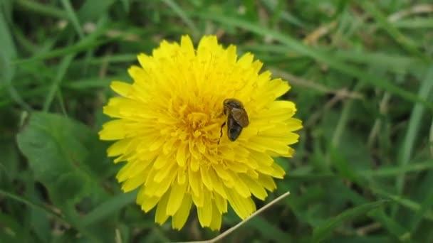 hmyz na daisy