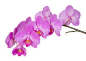 Fotografie orchidej na bílém pozadí