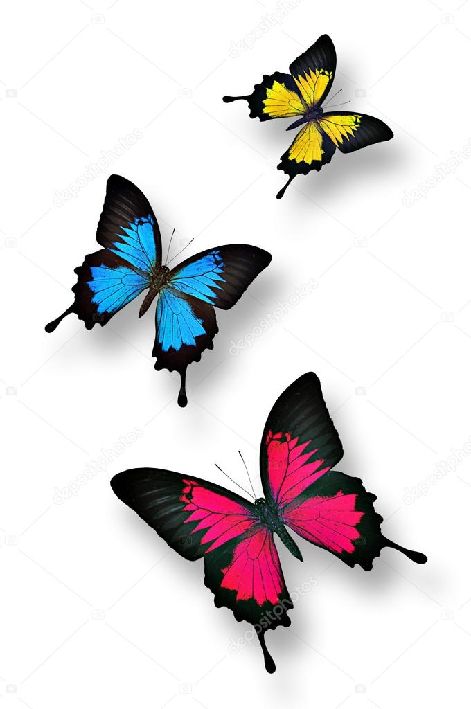 Colorful butterflies — Stock Photo © kritchanut #35462633
