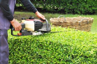 Gardener trimming hedge with trimmer machine in the garden stock vector