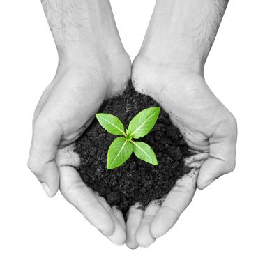 Hand holding green sapling with soil