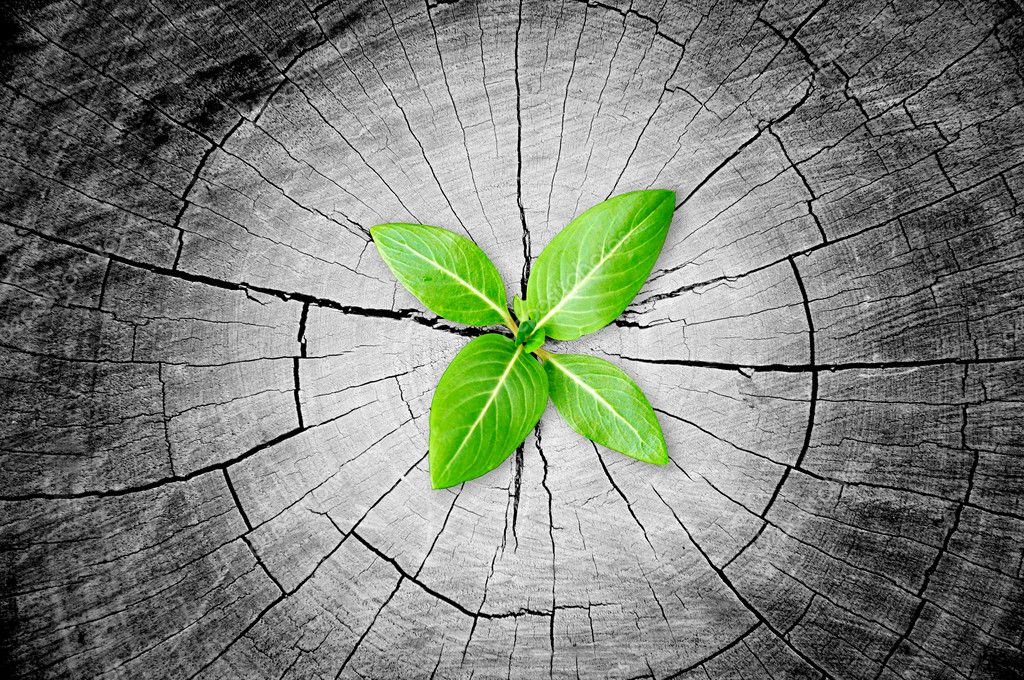 Green seedling growing from tree stump - regeneration and development concept