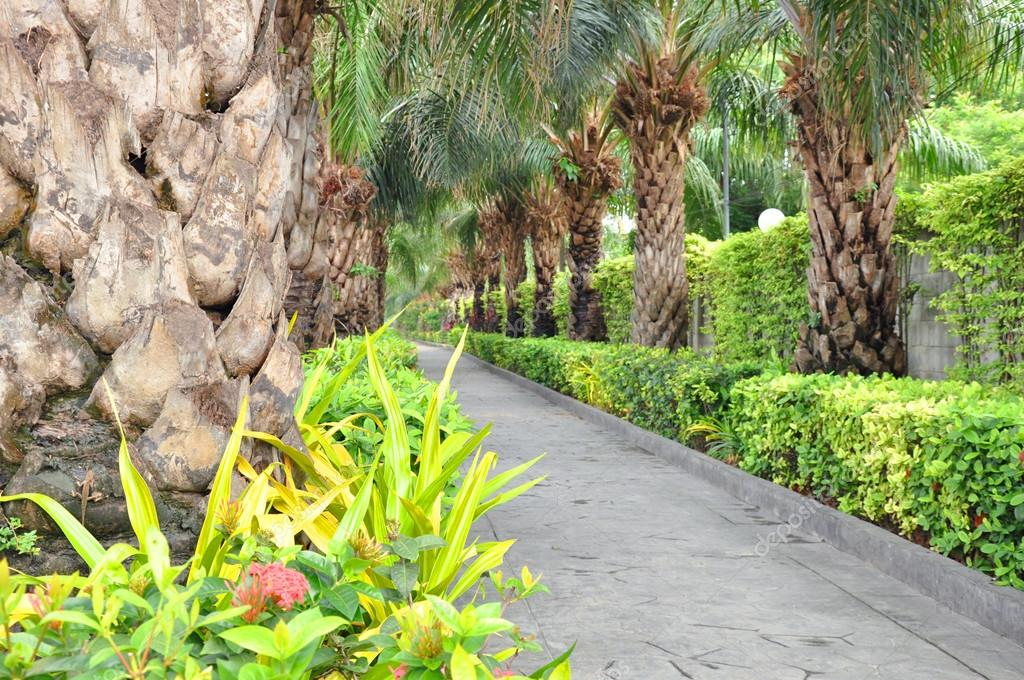 Walkway in the garden with hedges and palm trees along two sides