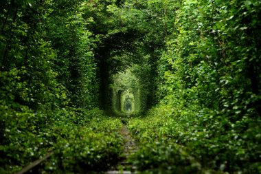 Railway running from the alley of trees
