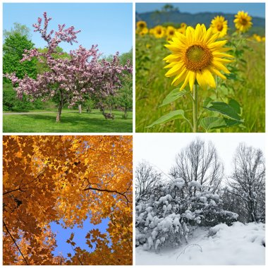 Four seasons. Spring, summer, autumn and winter landscapes. stock vector