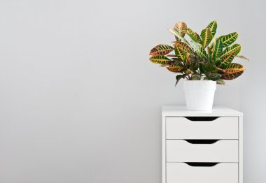 Bright plant and white drawer chest