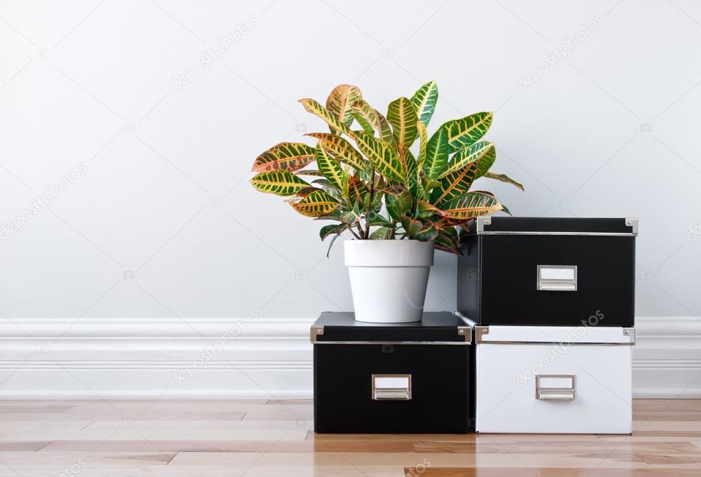 Boites De Rangement Et Une Plante Verte Dans Une Chambre