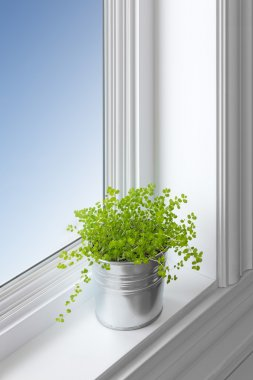 Green plant on a window sill