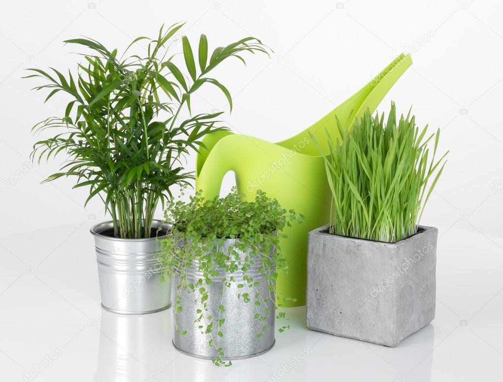 Beautiful plants and green watering can