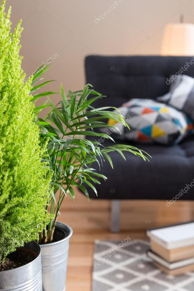 groene planten in de woonkamer — Stockfoto © GoodMoodPhoto #36536561