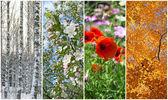 Fotografie Winter, Frühling, Sommer und Herbst. vier Jahreszeiten