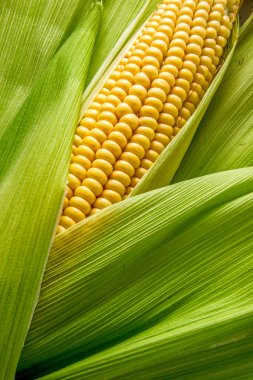 Cob between leaves