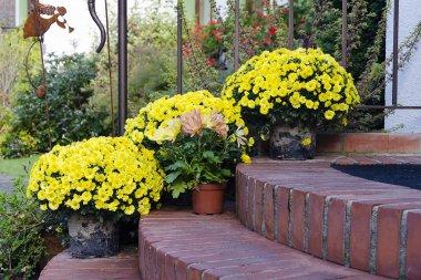 Autumn flowers on doorsteps