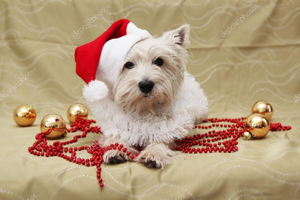 Cute dog christmas card — Stock Photo © Carambola #37027489