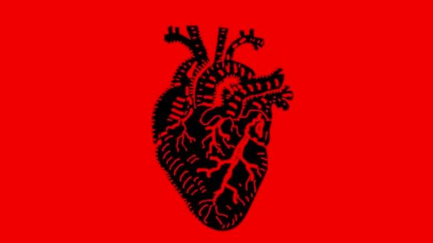 lidské srdce bít