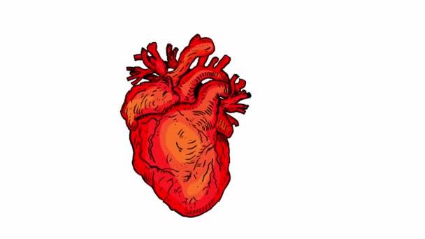 battito del cuore umano