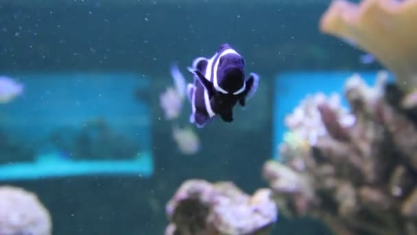 Aquarium Fish Stock Video C Mihaidancaescu 24505755