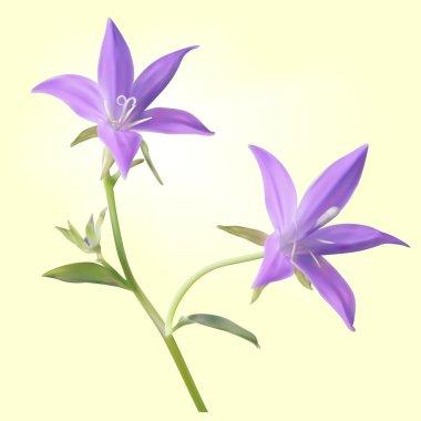 Two purple bellflowers