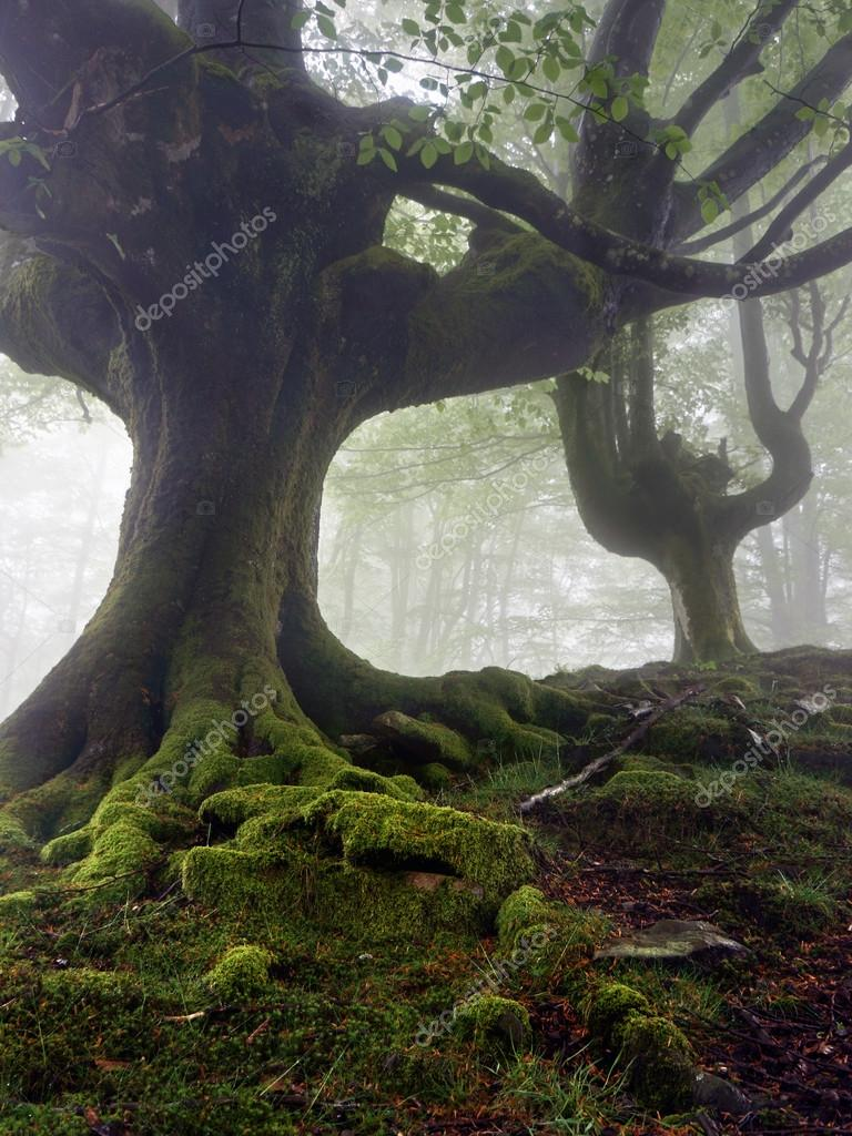 Фотообои Mysterious and twisted trees in fog with green roots