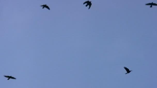 černí ptáci na obloze